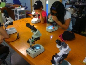 school children using microscopes