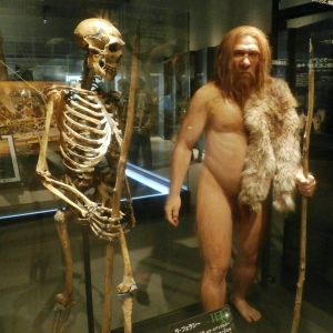Skeleton and restoration model of Neanderthal (La Ferrassie 1). Exhibit in the National Museum of Nature and Science, Tokyo, Japan.
